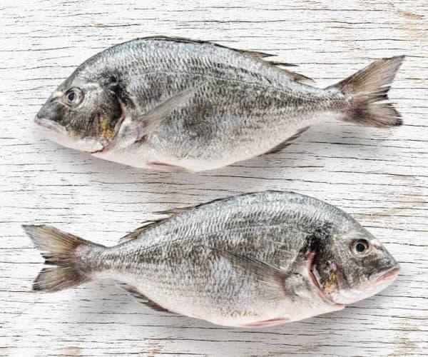 דגי אמנון